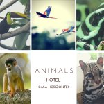 Animals you can encounter in the garden