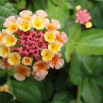 Unknown flower type