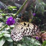 Victoria Butterfly Gardens Foto