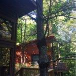 Rivers Edge Treehouse Resort Foto