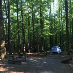 B40 Campsite at Cosby Campground