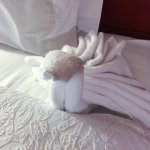 little towel swan