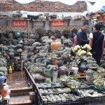 Shop displaying varieties of cactus