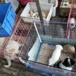 Rodents on display for sale
