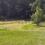 Wild turkeys in front of the cabins.