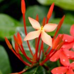 Beautiful tropical garden flowers