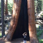 Big tree with son