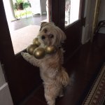 Teddy the Lovable Guard Dog, is only allowed access and visitation rights if guests are comforta
