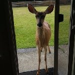 We had a visitor at the patio door.