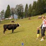 Appena fuori dall'hotel si possono incontrare le mucche al pascolo