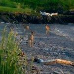 Foto de Kodiak Legends Lodge
