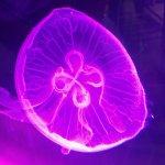 Une méduse ...