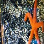 Étoile des neiges ? Erreur ... étoile de mer lol