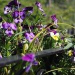 Beautiful flowers outside
