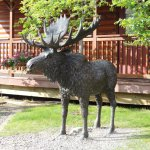 Moose Bronze Statue on the Lodge