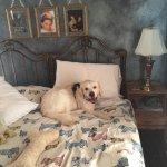 Dexter enjoying the Judy Garland Room after we checked in.