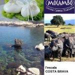 Mocambo Foto
