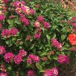 Maison d'hôte accueillante et fleurie