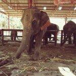 Photo de Elephantstay