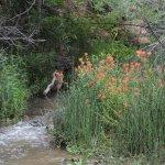 Kanarra Creek Foto