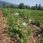 Photo de Agriturismo Le Bottesele