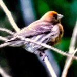 Kipuka Puaulu (Bird Park) Trail