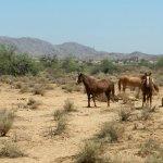 Photo de Sheraton Grand at Wild Horse Pass