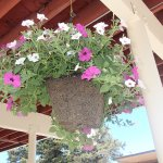 beautiful flower baskets throughout the town Jackson