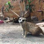 Foto de Seneca Park Zoo