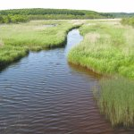 Kiritappu Wetlands