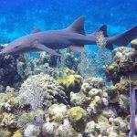 Foto de Seasports Diving