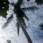 Foto de Octopus Resort