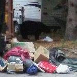 Photo de Phoenicia Black Bear Campground