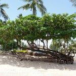 Photo de Kantary Beach Hotel Villas & Suites Khao Lak