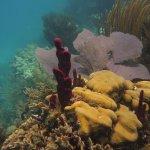 Hammer Korallen