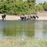 Photo de Chobe Tented Safari