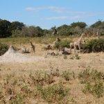 Chobe Tented Safari Foto
