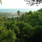 Photo de Vivanta by Taj - Green Cove