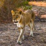 Photo de Londolozi Private Game Reserve
