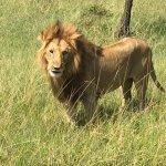 Photo de Eagle View, Mara Naboisho