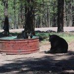 Foto de Bearizona Wildlife Park
