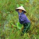 Foto di Emeralda Resort Ninh Binh