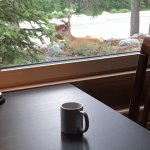 Great view of the local wildlife right outside the window for the breakfast nook!