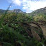 Foto di Jungle Hut