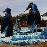 burung pinguin bjbr