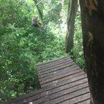 Foto de Selva Maya Eco Adventure