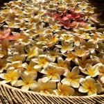 Beautiful Bali resort. Lovely canopy over the bed. Lovely pool. Friendly approachable staff. On