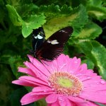 Photo de The Original Mackinac Island Butterfly House & Insect World