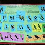 Description of commonly seen birds.