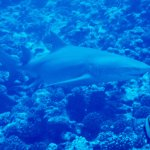 Eleuthera Bora Diving Center Foto